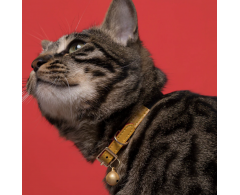 Collier anti-étrangelement Chat Simili cuir